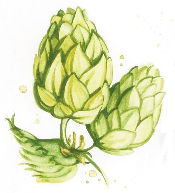 inspiration for my hop tattoo. but line and color old school/sailor jerry style