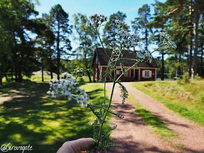 Finlandia in estate: una vacanza nella natura dell'arcipelago di Turku