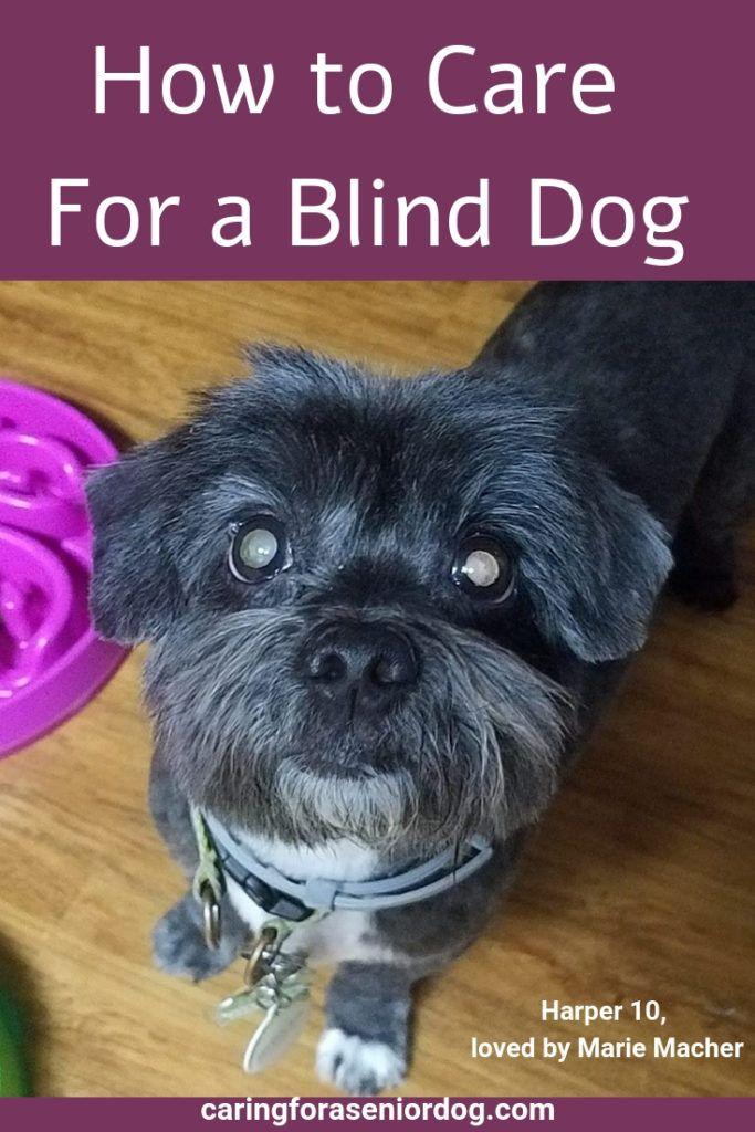 How To Keep Your Blind Dog Safe Dog Care Dog Training Dogs