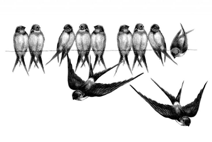Swallows on a line ~ original postcard image and blue-tinted versions available.