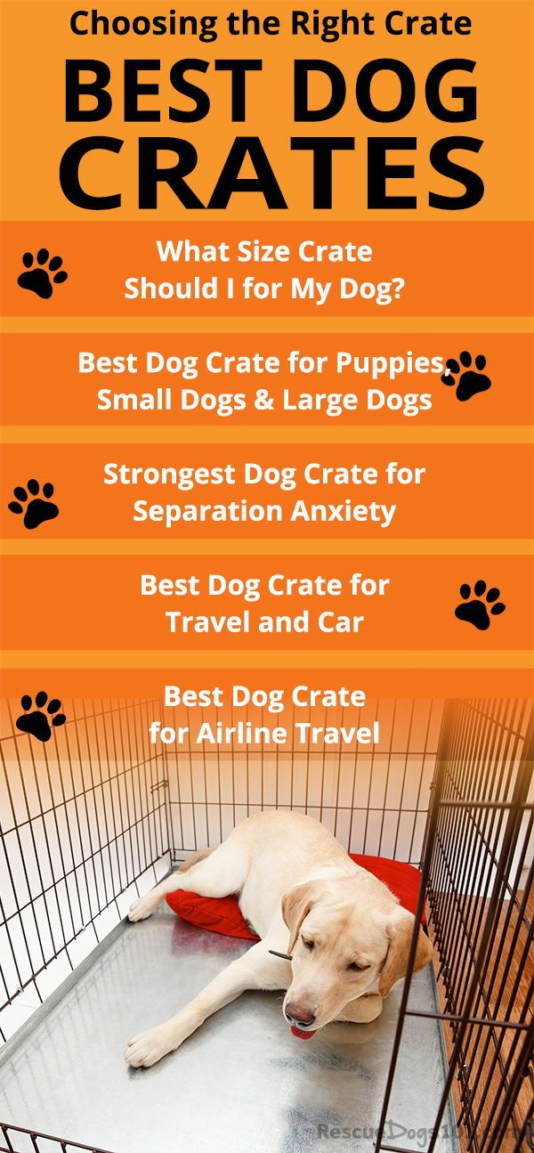 Finding The Best Dog Crate For Your Dog Dog Crate Soft Dog