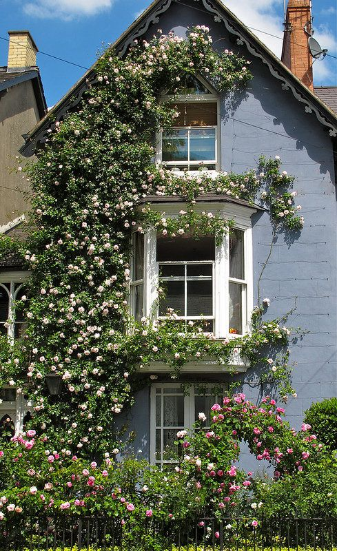 Good Rosa U0027New Dawnu0027 Covers A House. Beautiful RosesBeautiful GardensClimbing ...