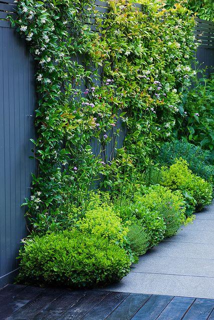 Jet Black Garden | Small contemporary garden planted with Trachelospermum Jasminoides, Alchemilla Mollis and Verbena Bonariensis | Charlotte Rowe Garden Design