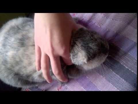 Massage du lapin 3 : les oreilles - Vidéo Association Marguerite & Cie