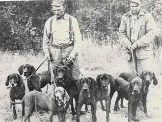 Southern Hunting Dog Breeds | www.picswe.net
