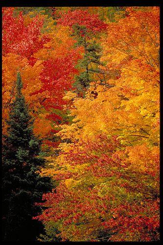 Fall in New Brunswick, Canada / L'automne au Nouveau-Brunswick, Canada