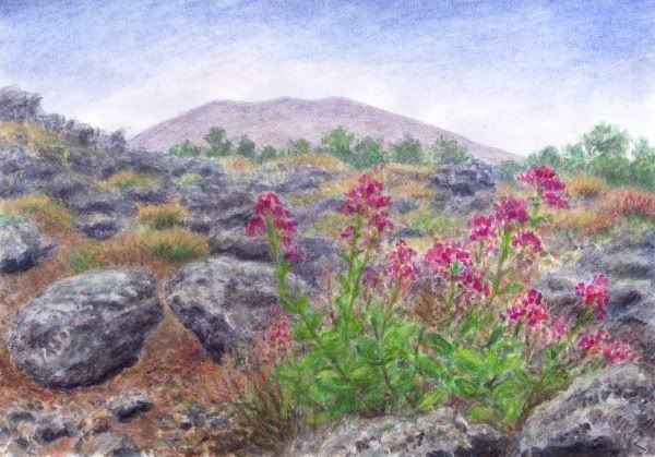 Valeriana rossa on lava Vesuvius, watercolor and pastel by Jana Haasová