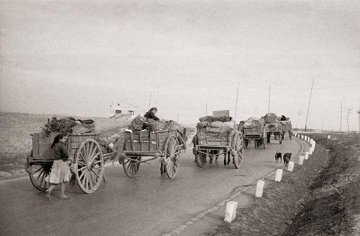 Caravana de traperos en la carretera de Madrid a Alcalá de Henares (14-12-51)