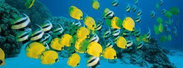 Fotosub - La fotografia subacquea