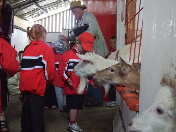 Feeding in the barn