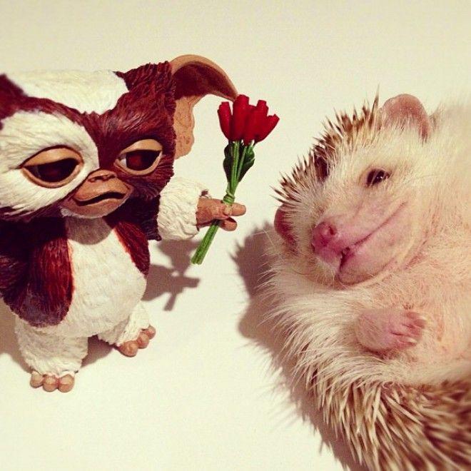 La fotografa giapponese Shota Tsukamoto ha creato un profilo su  Instagram  in cui colleziona e condivide oltre duecento foto del suo animale domestico, un riccio di tre anni di nome Darcy. Oltre a mostrare il porcospino accoccolato nel palmo della sua mano, l'autrice ama rendere la sua amica a quat