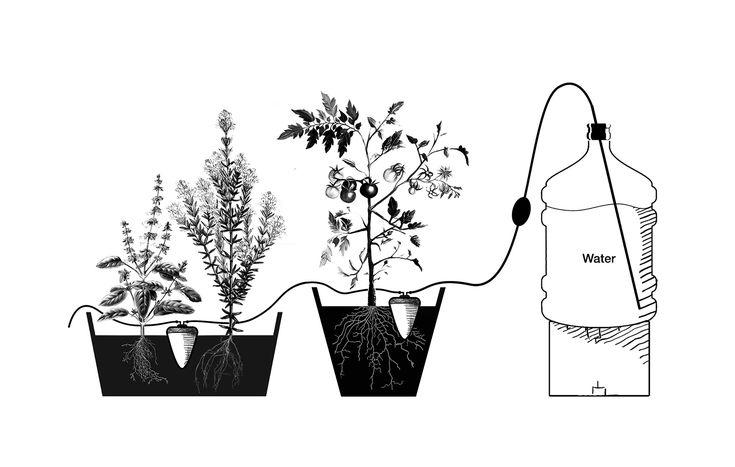 urban gardening, Water Issues, cairo, egypt, irrigation, Features, self watering pots, carousel showcase, handmade design, Design, Urban Farming, Water Issues, gardening, ancient design, artisanal design, Clayola, Rami Halim