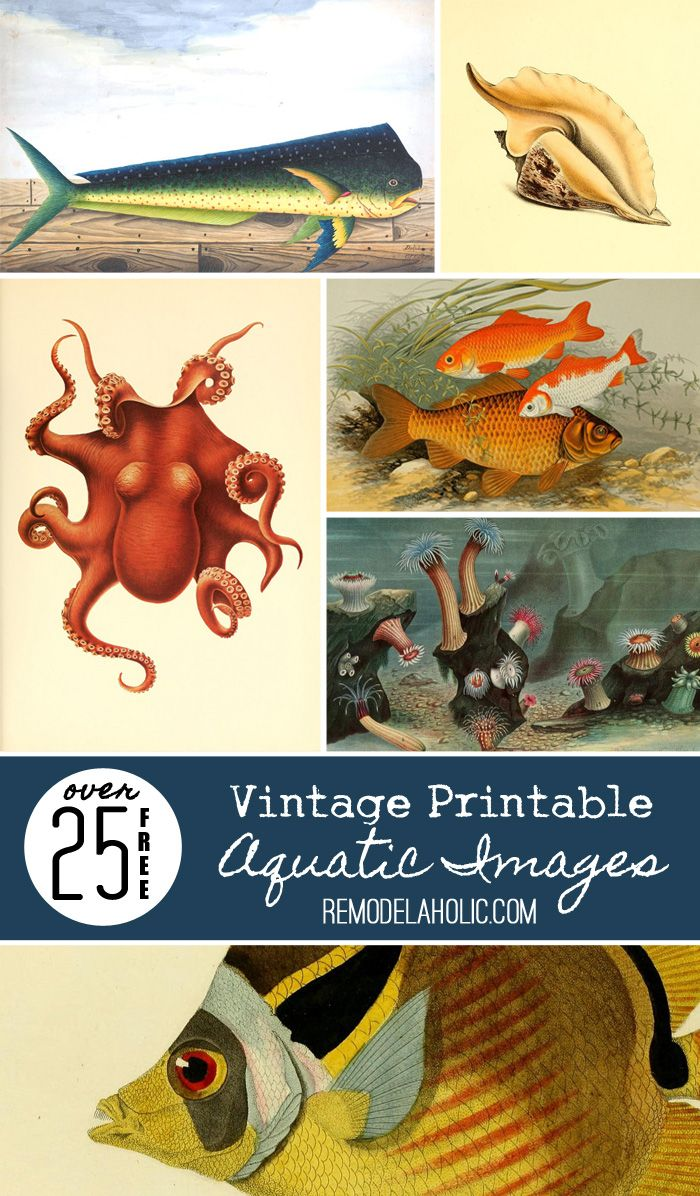 25+ FREE Vintage Printable Aquatic Images via Remodelaholic.com -- perfect for decorating a beach house or just dreaming of the ocean and marine life!