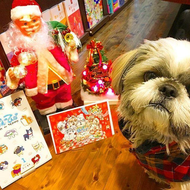 クリスマスキャンペーン残りあと3日‼️プレゼントの準備はお済みですか? 初心者飼い主とシーズーの日常記【あうんのてんぽ1巻】ご購入(1500円)で大きなクリスマスカードを同封します(封筒付)🎁 愛犬家さんやお子様、ご実家へのプレゼントにも好評です。カードは数に限りがあるのでお早めに。お申し込みはHPかダイレクトメッセージで「発送先と購入冊数」をお知らせだけでもOKですよ🐶お気軽にどうぞ。  #シーズー #鼻ペチャ #shihtzu #shihtzuclub #shihtzuworld #shihtzumania #shihtzusociety #shihtzunation #shihtzulovers #shihtzulove #愛犬 #わんこ #犬 #doglovers #instadogs #instapets #bestphotgram_dogs #dog #京都 #京都在住 #kyoto  #webマンガ #イラストレーター #illustrator #aun #あうんのてんぽ #シーズー大好き部 #クリスマス #xmas #christmas