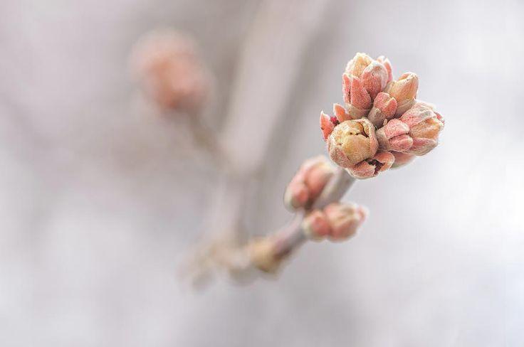 Jane Star Photograph - The Eve Of Spring by Jane Star  #JaneStar #Spring #Springtime #ArtForHome #InteriorDesign #HomeDecor