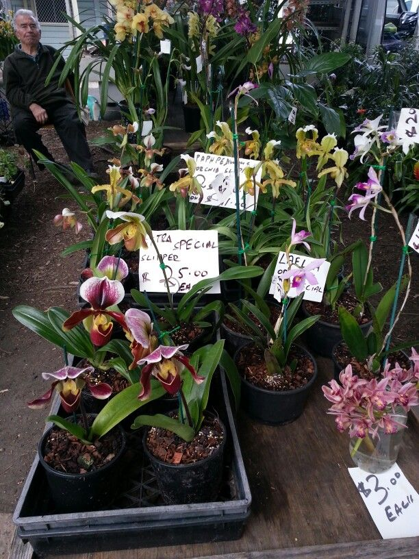 The orchid stall at the markets