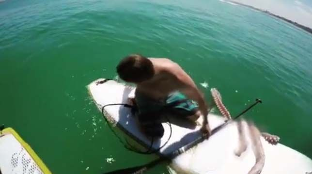 (adsbygoogle = window.adsbygoogle || []).push();   Una lección que no olvidará. Una grabación recogecómo un calamar gigante hace enredarse a un surfero con las cuerdas de su tabla y lo arrastra al agua. El protagonista del video, el sudafricano James Taylor, se había...