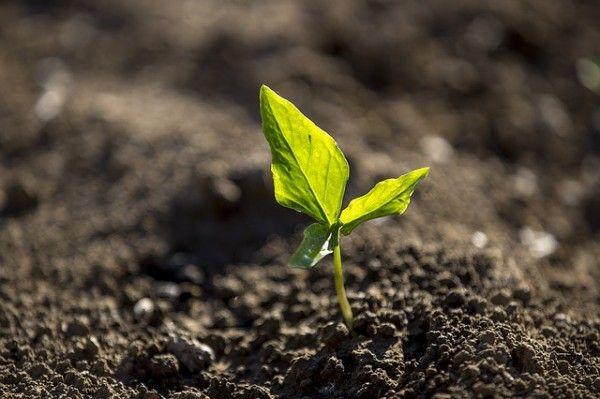 Si queremos tener un jardín o una huerta sanos y libres de plagas y enfermedades hemos de comenzar por tener un suelo sano. Esta sencilla máxima, un suelo sano para un jardín sano, nos va a evitar muchos problemas y trabajos así como gastos económicos. Hemos de crear un suelo vivo que nos garantice un correcto microsistema natural.  El suelo no es una base inerte sobre la que crecen las plantas, el suelo está o debe estar formado por materiales inorgánicos y por una gran parte de materia…