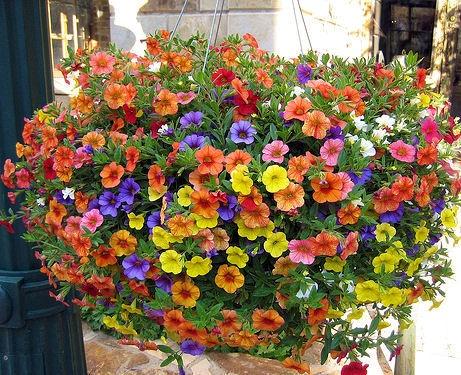 143 best images about hanging baskets on pinterest - Plantas colgantes de exterior ...