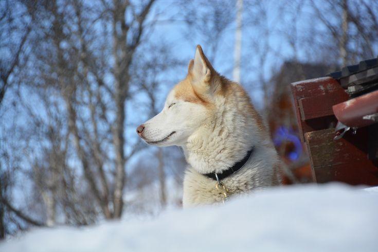 Skifahren in Hovden, Norwegen: Saisonabschluss in Stille