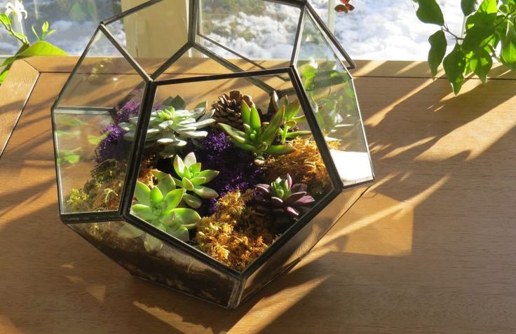 Terrarium pour plantes grasses: instructions détaillées et vidéo.
