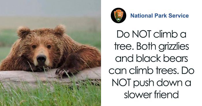 National Park Service Shares A Hilarious Psa On What To Do And Not To Do In Case Of A Bear Encounter National Park Service Park Service National Parks