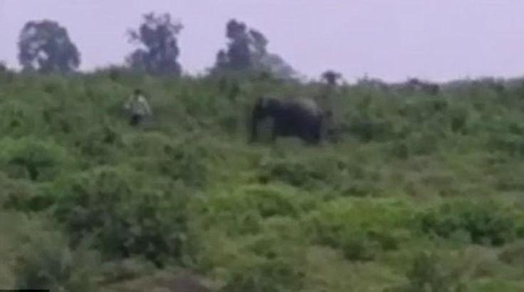 Ινδία: Ελέφαντας ποδοπάτησε άνδρα που πήγε να βγάλει selfie μαζί του (βίντεο)