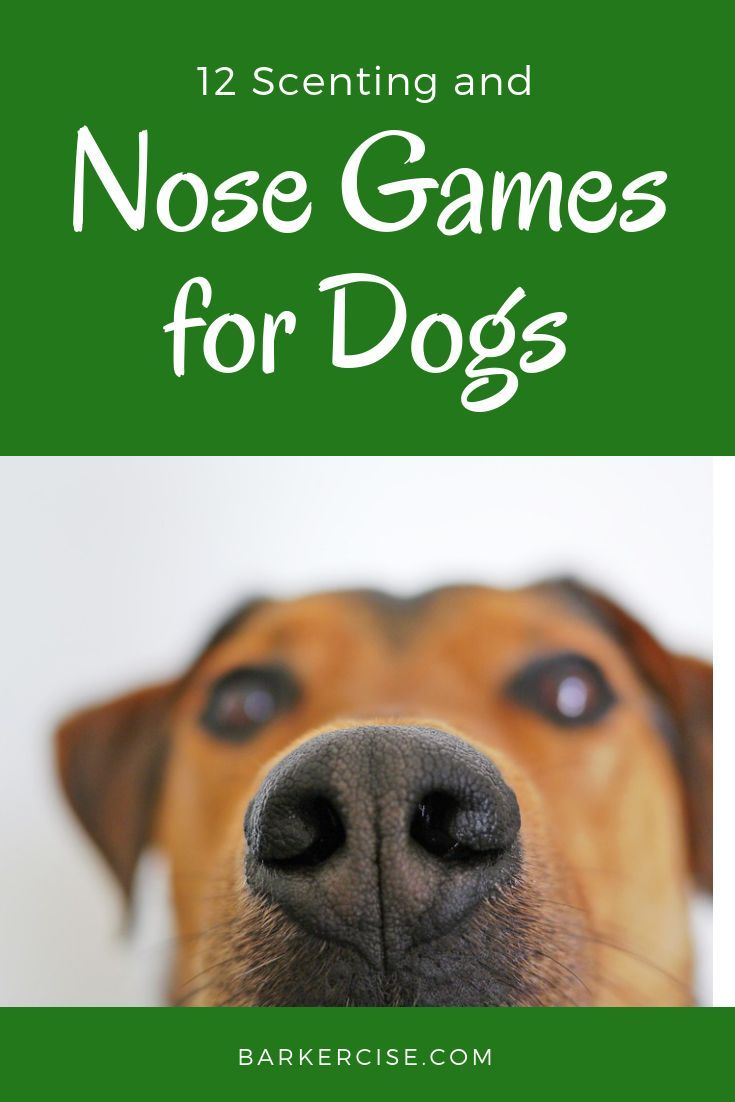 12 Scenting And Tracking Nose Games For Dogs Dog Training