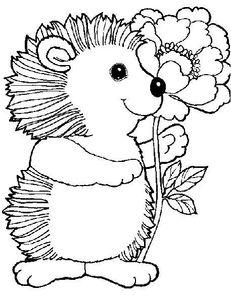 Coloring page Hedgehog Animals