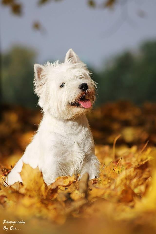 Photograph Gold autumn by Evelina Macijauskaitė