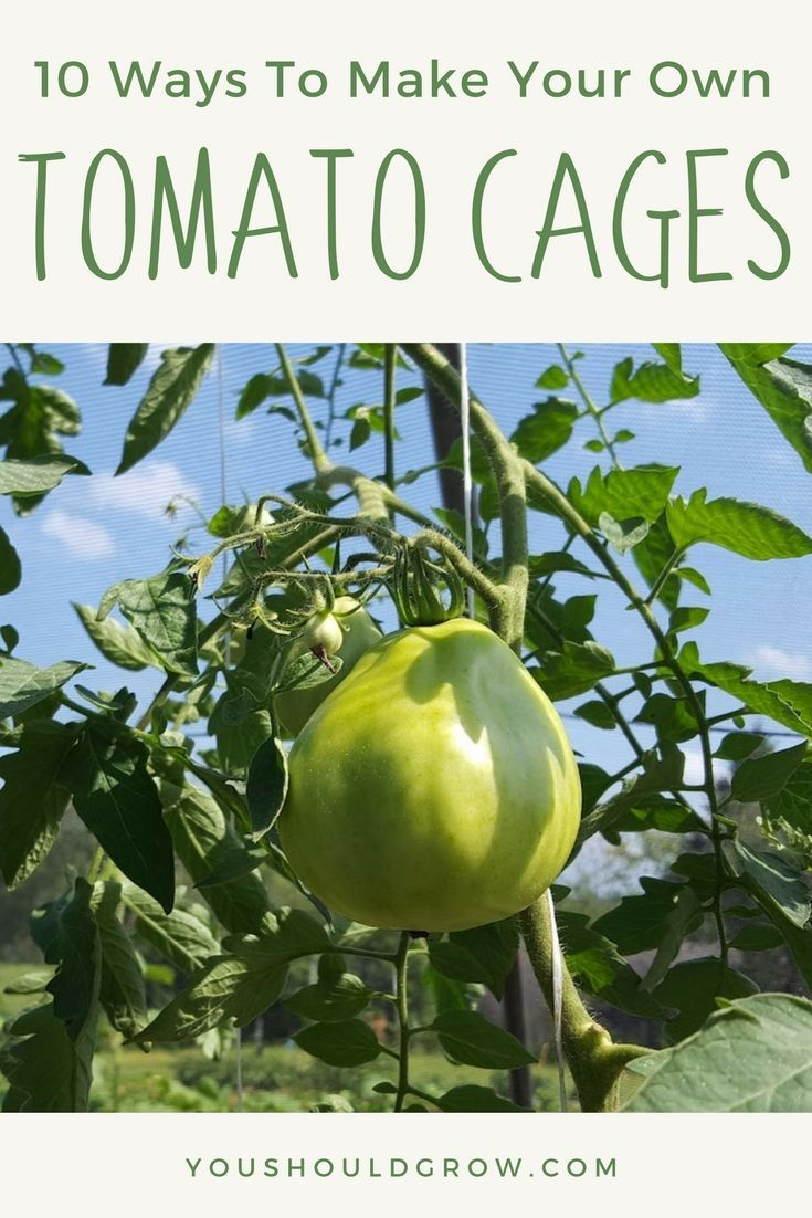 DIY tomato cages for organic vegetable gardening