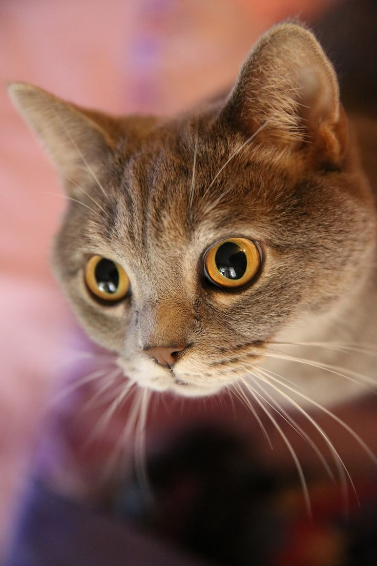 pretty cat  face and eyes