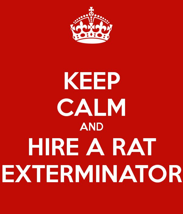 Have you got a rat problem and don't want to deal with it yourself?  If so then you are going to need to hire a rat exterminator. Sometimes it is better to call a professional than tackle a project like this yourself.  Rat exterminators often will have access to different types of rat poison, fumigants …
