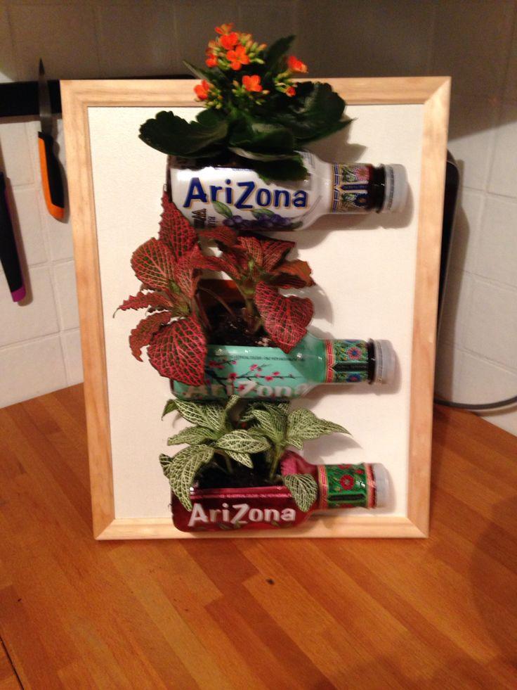 Cadre et plantes dans bouteilles Arizona