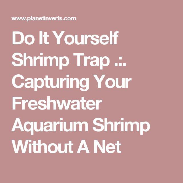 Do It Yourself Shrimp Trap .:. Capturing Your Freshwater Aquarium Shrimp Without A Net