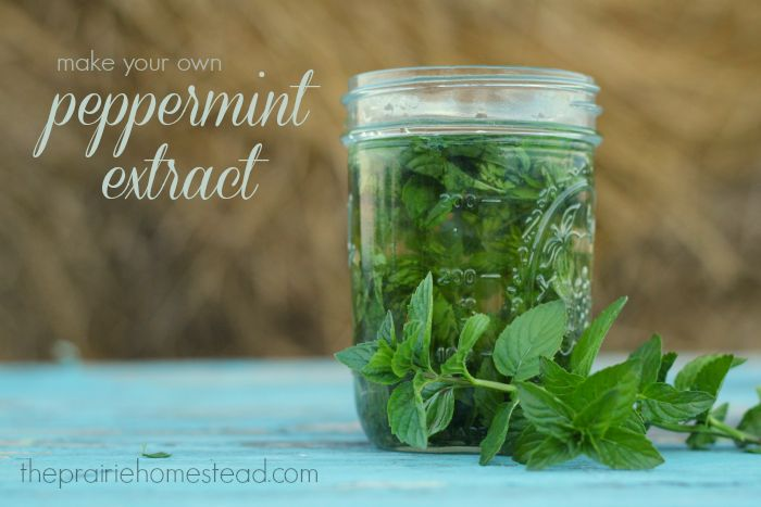 DIY Mint Extract- Perfect for Homemade Gifts with some rum and a mojito recipe