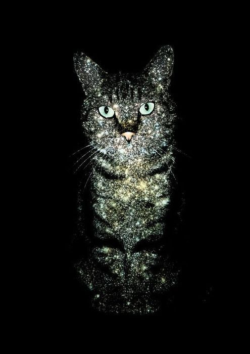 *A cat with starry fur came up to Silverheart * The clans will shatter into darkness, for only three cats can save the destiny of the clans. *Silverheart woke up in here nest* Great StarClan! I have a prophecy! (RP here)