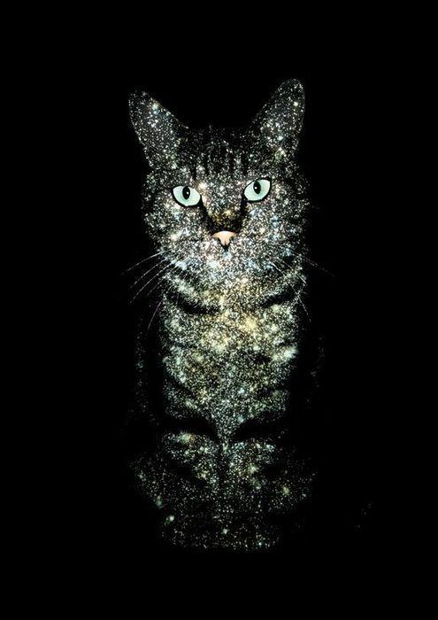 cool cat!