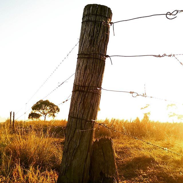 Discover the Downs in Toowoomba #thisisqueensland by @globalfarm