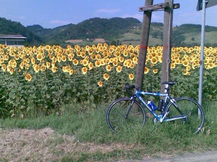 #PersonalTrainer #Bologna #sport #allenamento #bicicletta #Colnago