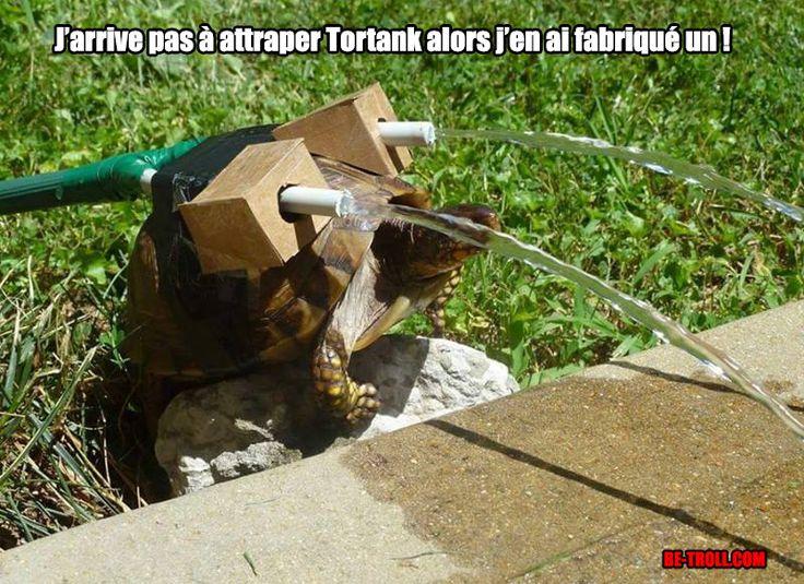 Je n'arrive pas à attraper Tortank... - Be-troll - vidéos humour, actualité…