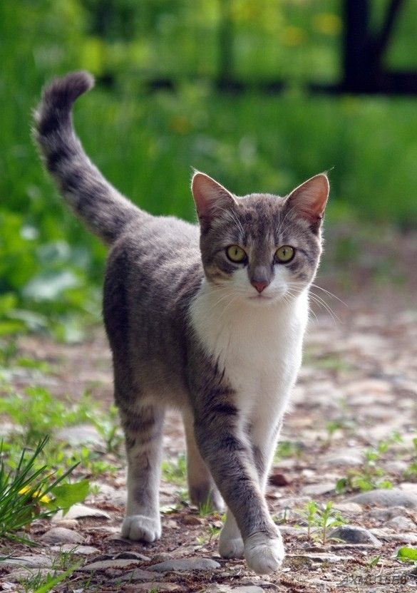 Animals Image By Liddy In 2020 Kittens Cutest Cute Cats