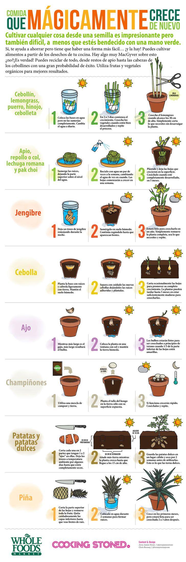 8 vegetales y hierbas que puedes comer y volver a rebrotarlos cada vez que quieras