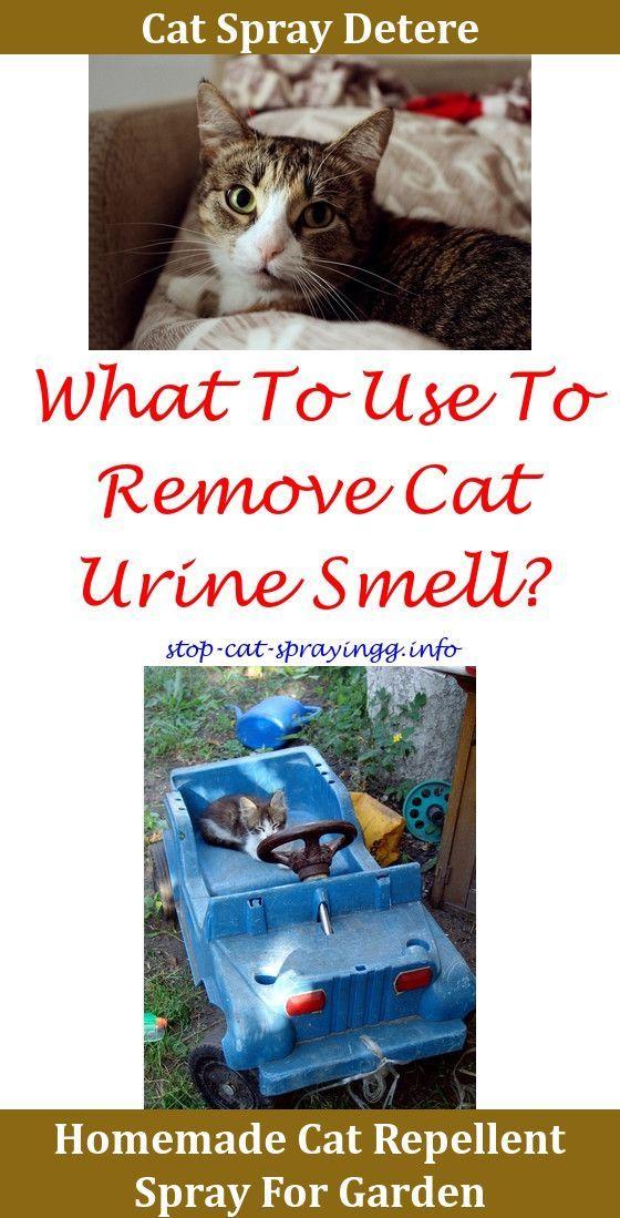 Pet Head Crazy Cat Lady Litter Box Room Fragrance Spray