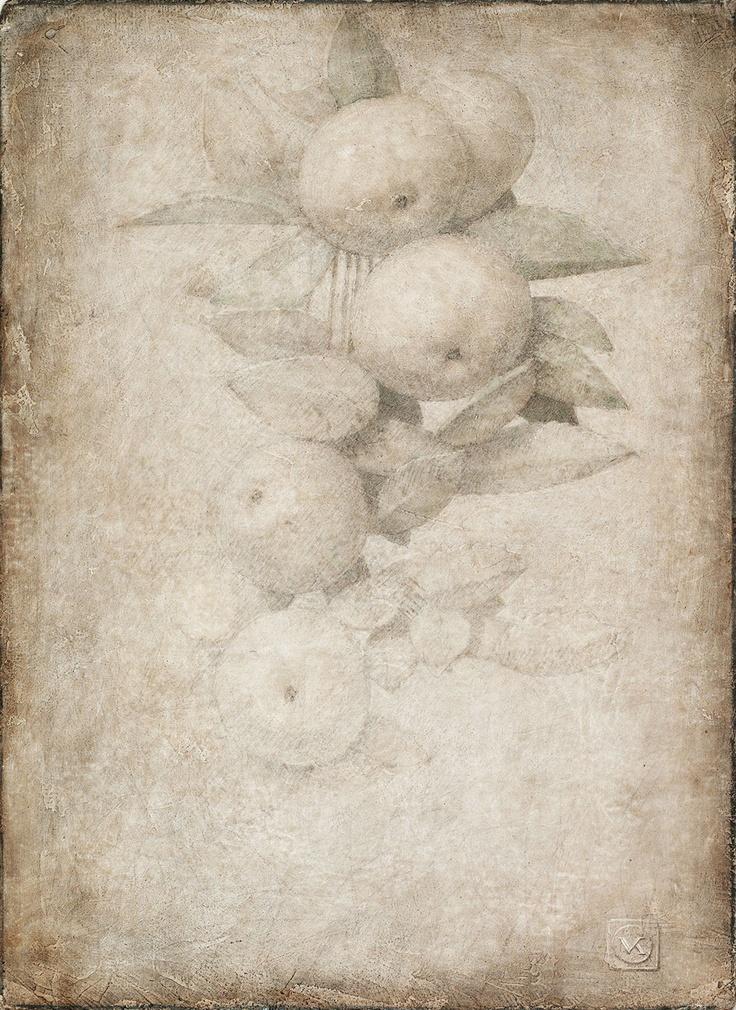 Manzanas en rama sobre papel Victor Koulbak More