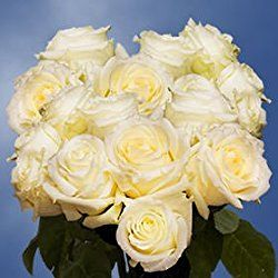 75 Fresh Cut White Wedding Roses Long Stem | Blizzard Roses | Fresh Flowers Express Delivery | Perfect for Valentine's Day, Anniversary or any occasion.
