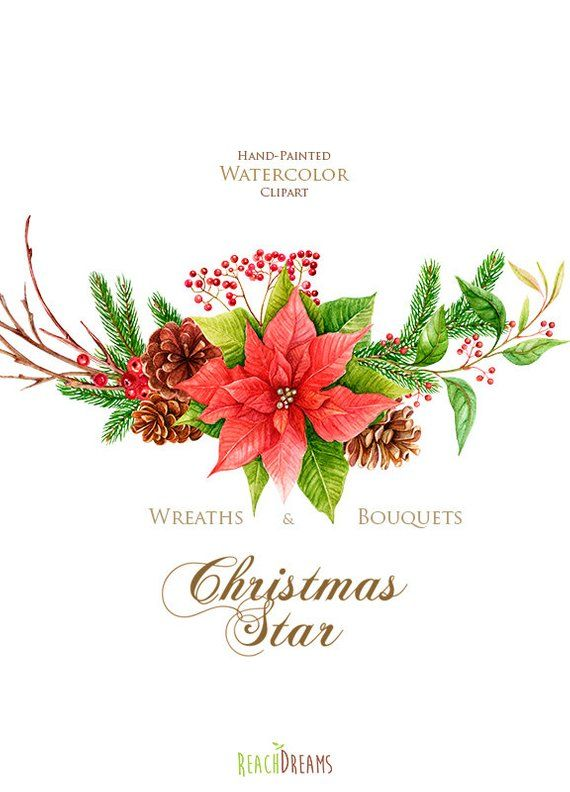 Poinsettia Etoile De Noel Joyeux Et Lumineux Aquarelle De
