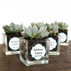 Mini Square Glass Succulent Favor