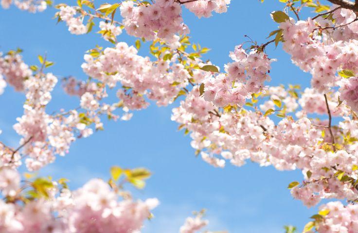 Bikarbonat i trädgården – effektivt till allt från utemöbler till sniglar | Sköna hem