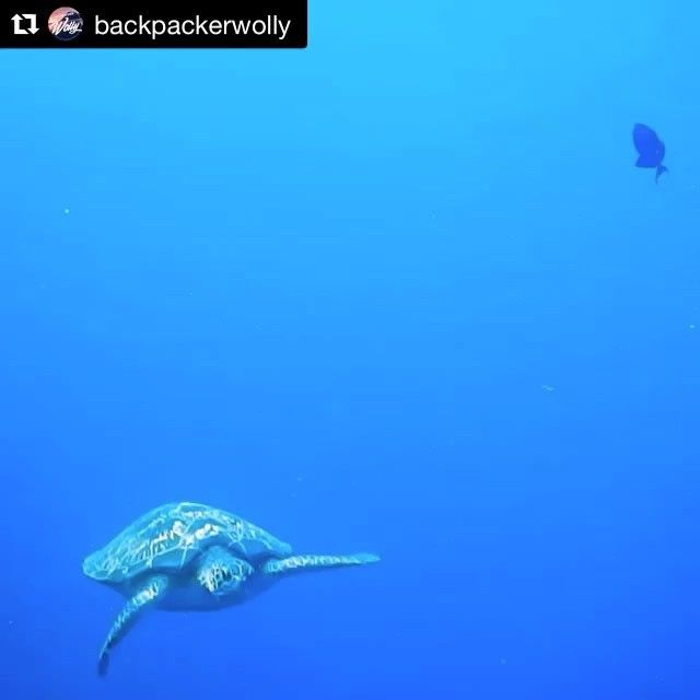 Wishing you a relaxing weekend with this magnificient seaturtle💙 #repost from @backpackerwolly 🙏🏼